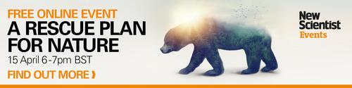bear woods image